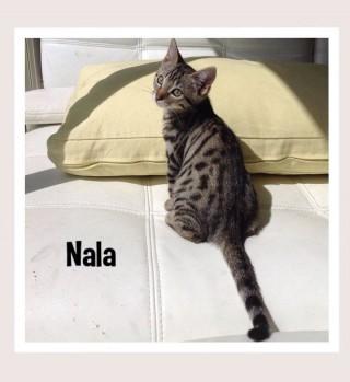 NALA3