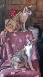 chatte 4 et 5