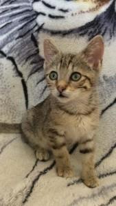 Petite chatte Fanny