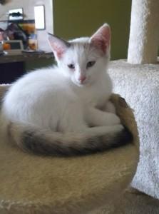 Pixie (3)
