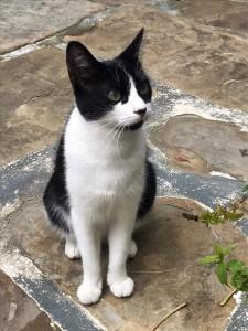 Minette (noire et blanche)